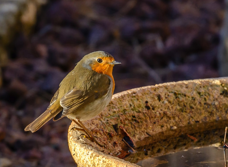 Robin is about to taking the morning bath