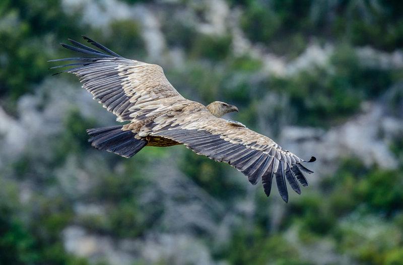 The eagle II