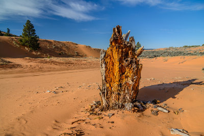 Coral pink Sand Dunes - Utah