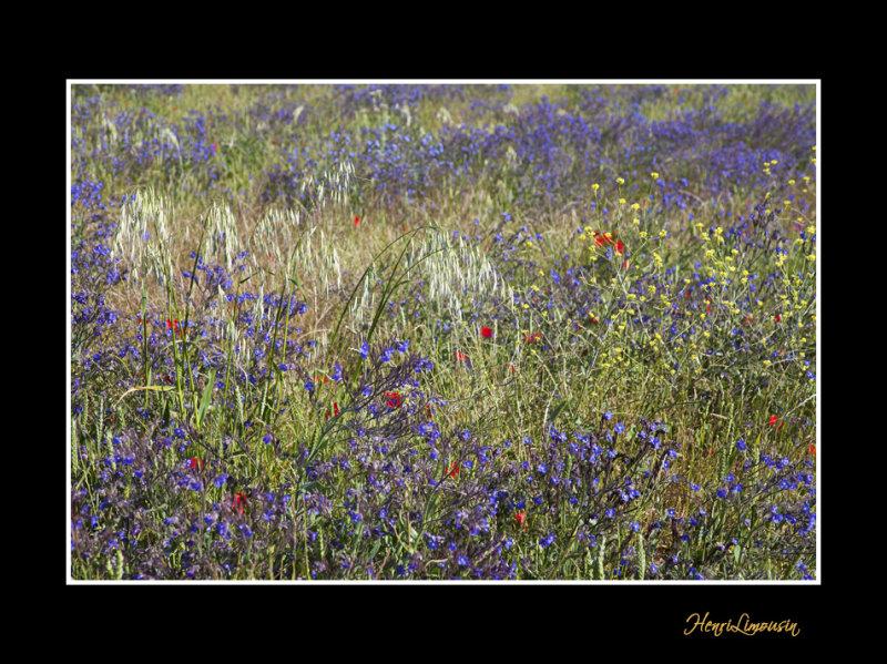 IMG_5600 nature fleur.jpg