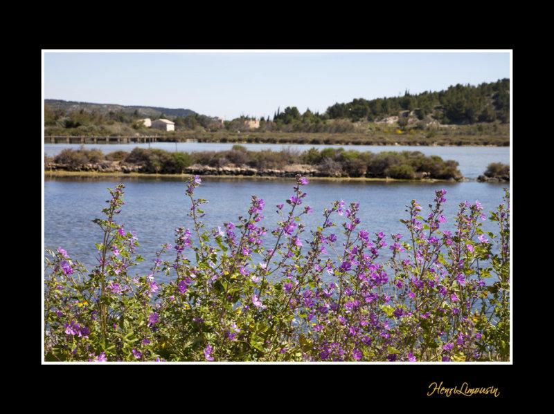 IMG_5672 paysage.jpg
