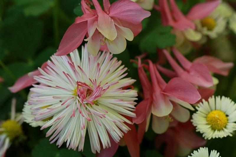 Flowers Macro<BR>May 14, 2013