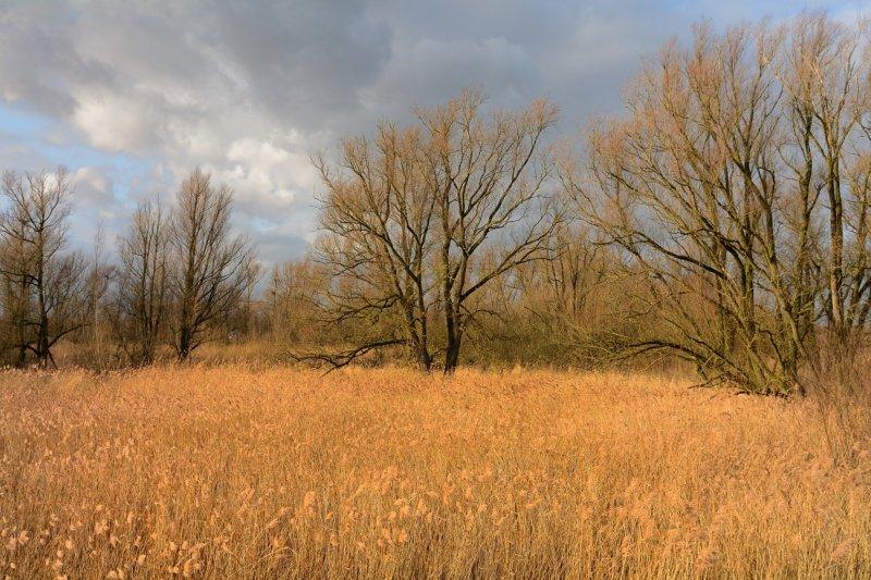 Riet en bomen
