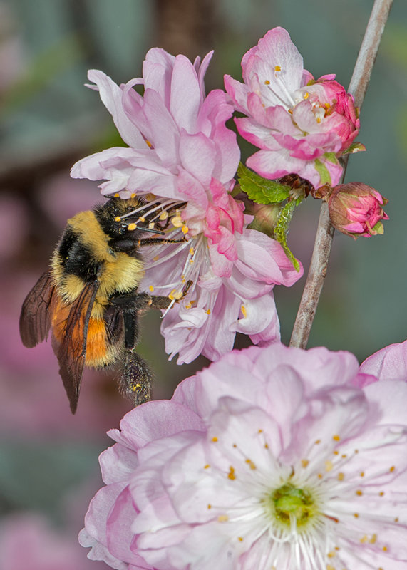 Beelossom