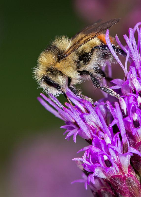 Pollination Poacher