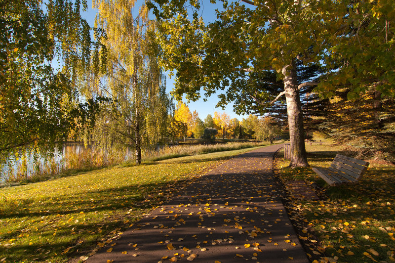Fall Along The Walking Trail