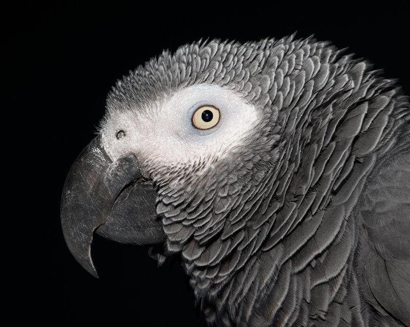 Huey Bird