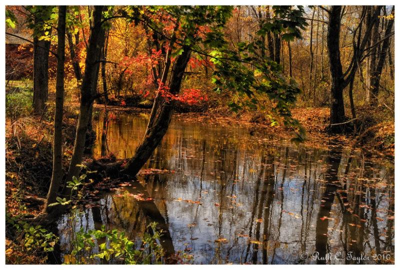 Autumn Along Pine Run Creek