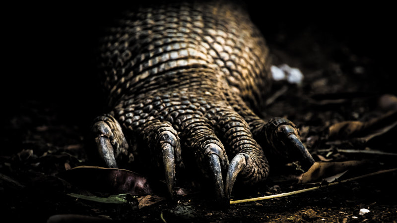 Claws of the Komodo