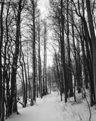 Sierras in Winter
