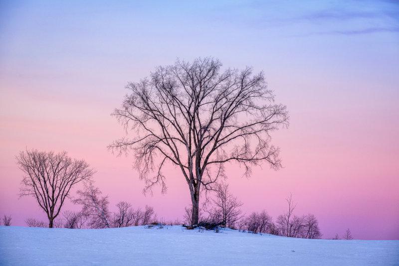 Pink evening sky