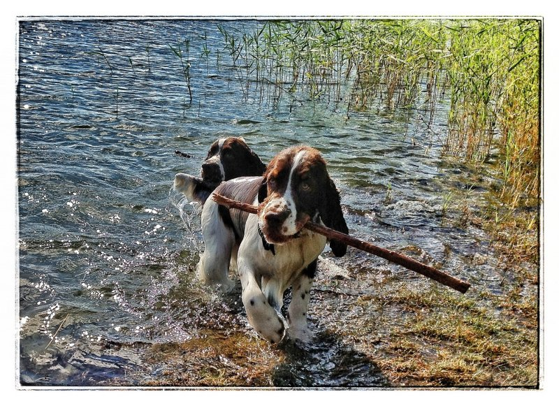 Jack with his huge stick...