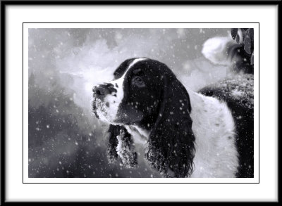 Jack enjoying the snow...