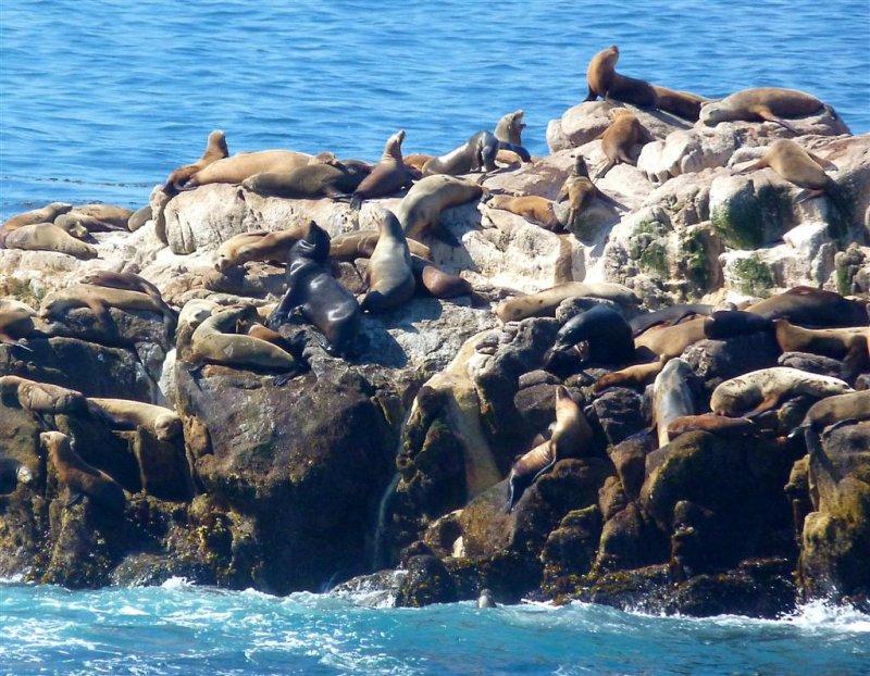 252 Sea Lion Point, Pt Lobos.jpg
