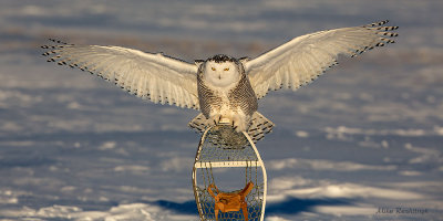 My Wingspan Is Longer Than Mike's  Snowshoe!