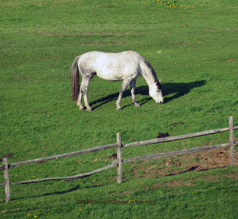 Huntington Farm Horse Grazing