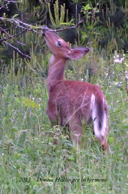 Tonite about 9 oclock a Doe Appeared