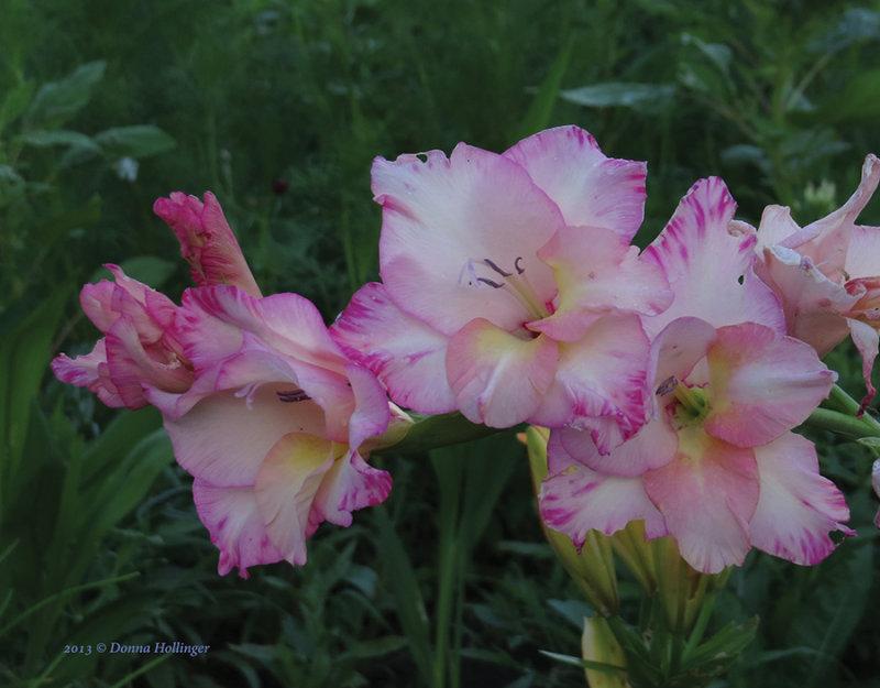 900.Michaels flower.2792.jpg