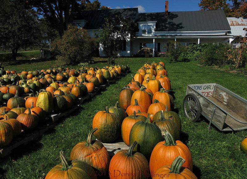 Farmstand Pumpkins