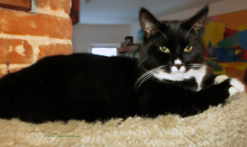 Jimi the bright Eyed Kitty!