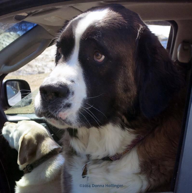 Pats Dog, GINGER