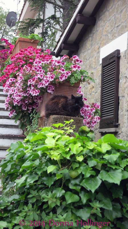 Geranium Flowers with Kitty