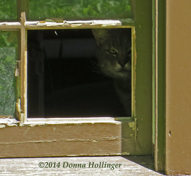 My Neighbors Outside Kitty