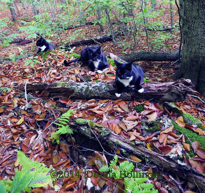 Jimi, Rocky and Rosie on a Walk today