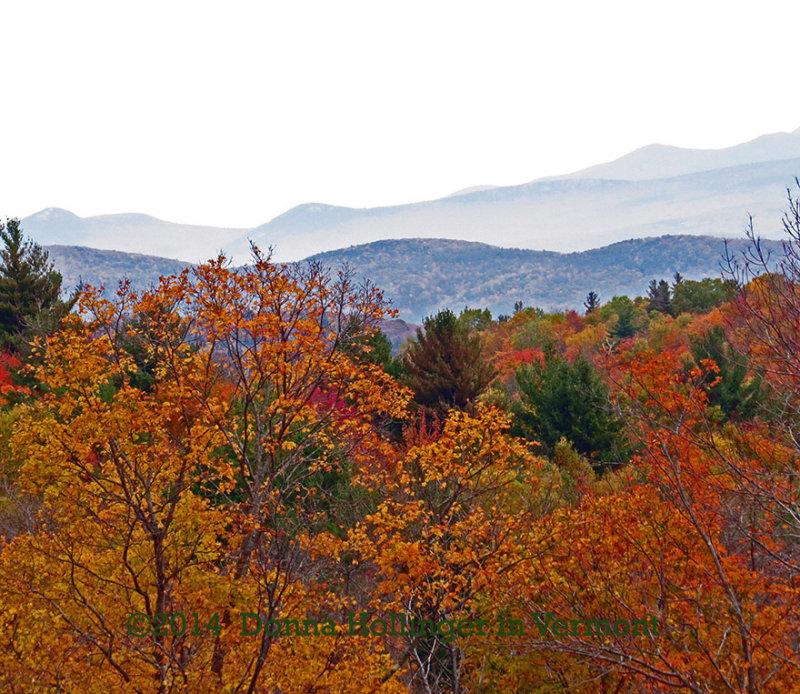 Misty Mountains and Orange Trees