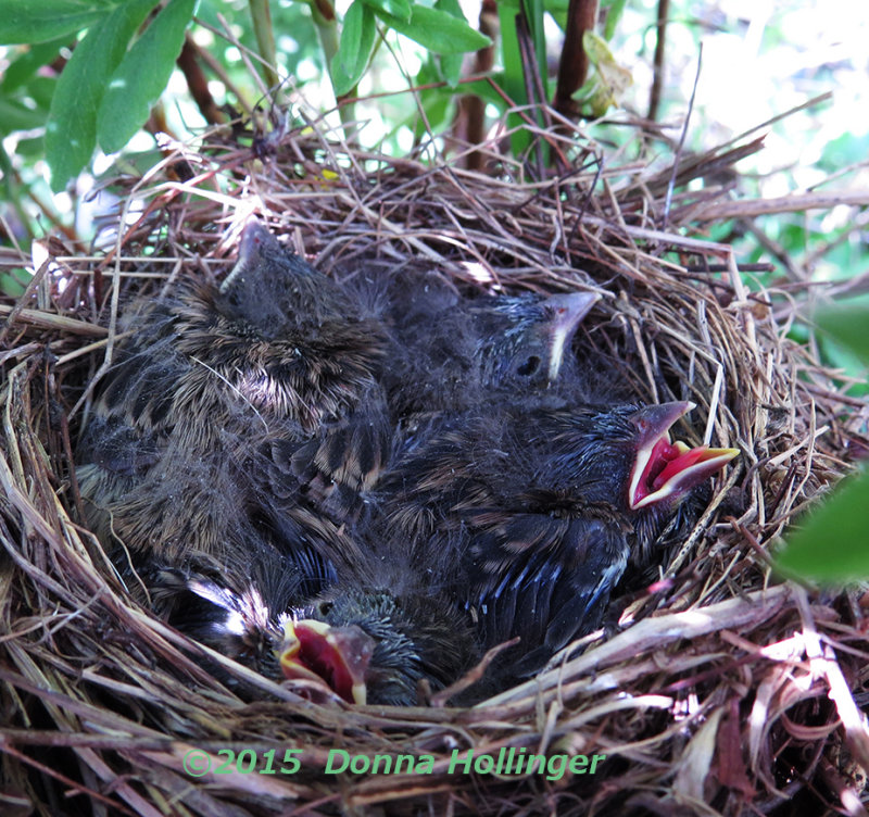 Renes Birdnest - ANYONE know what kind of chicks these are?