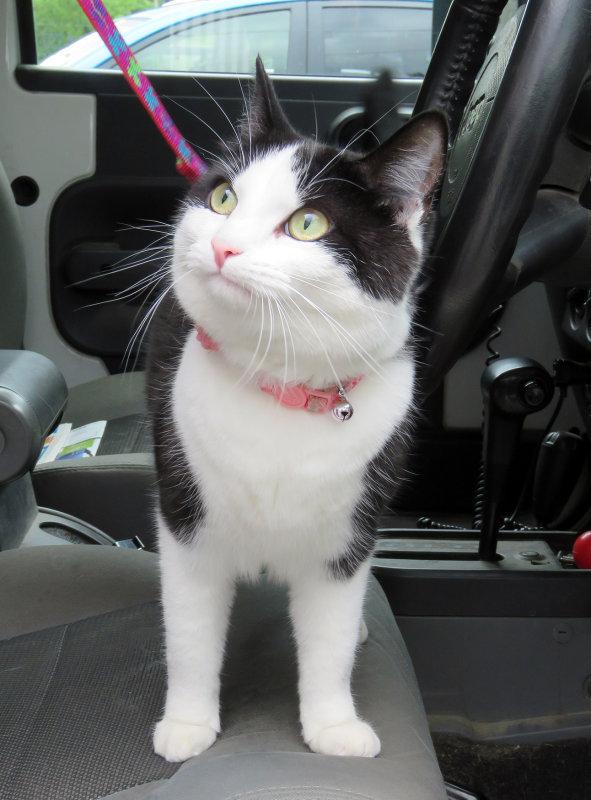 Marinas Kitty!