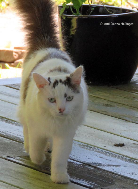liannes Kitty
