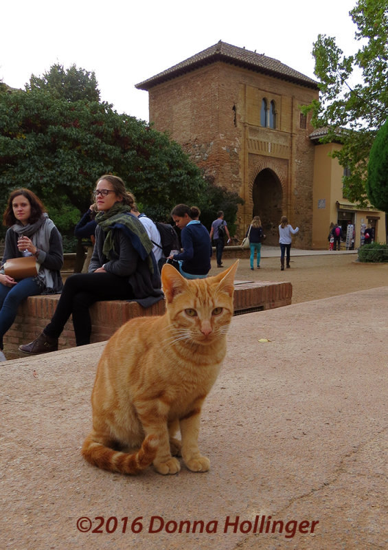 Tiger Kitten in the Forecourt to Alhambra