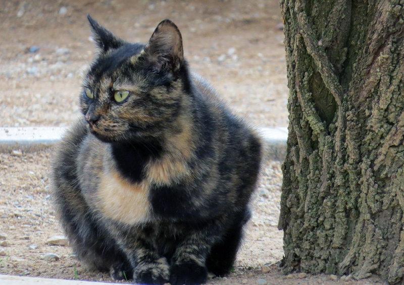 Alhambra Kitty