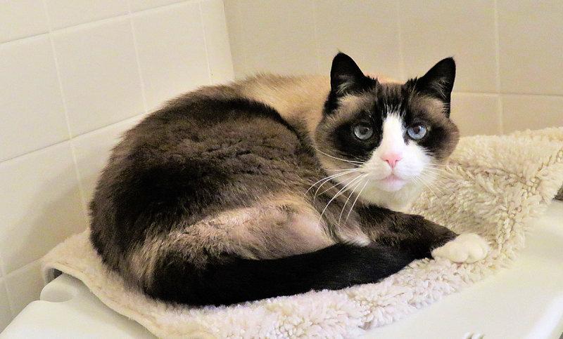 Gorgeous Lilicat Napping