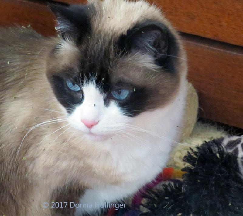 Lilycat with bits of Catnip