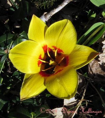 900.tulip.7768.copy.jpg