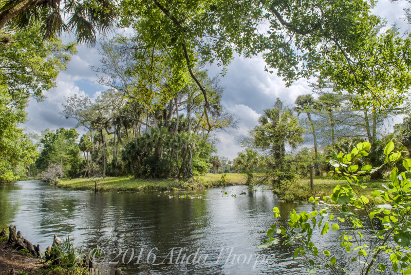 Florida Swamp in the Storm Clouds