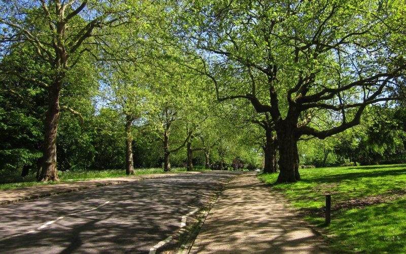 Dappled  sunlight  in  Finsbury  Park.