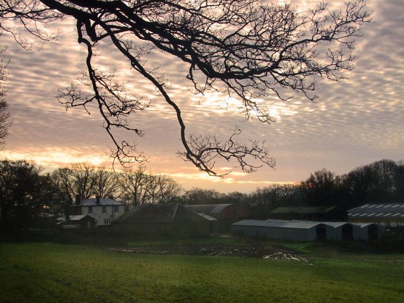 Hatchlands  Farm
