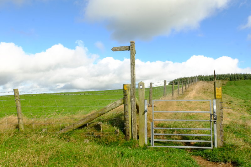 Offas  Dyke  descending  to the field  gate  .