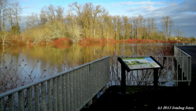Viewing Area at Delta Ponds