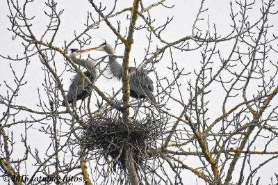 Just a Little Love Nest