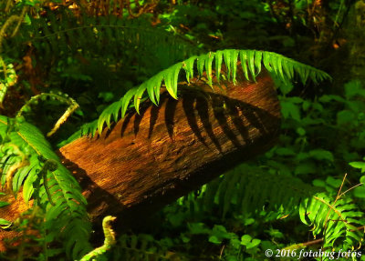 A Fern Grows in the Forest