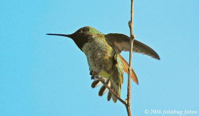 Stilled Wings