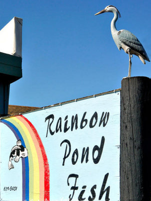 New Security Guard at Rainbow Pond Fish Store