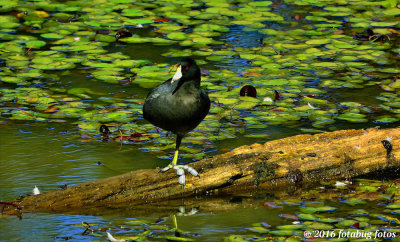 A Challenge From One Old Coot to Another