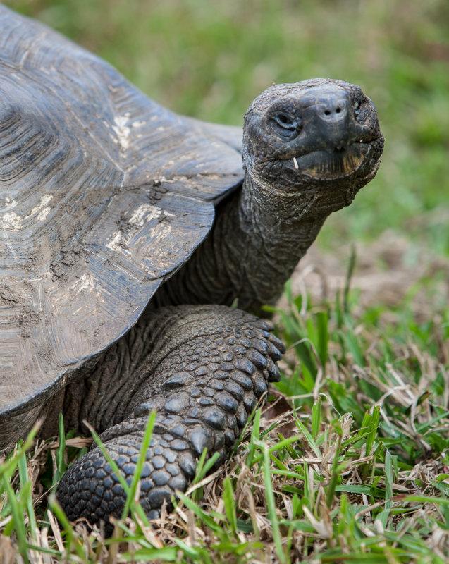 13-05 Galapagos 07.jpg