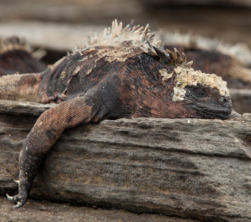 13-05 Galapagos 12.jpg