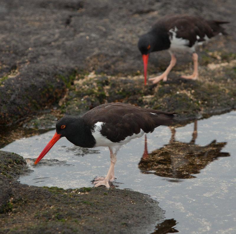 13-05 Galapagos 23.jpg